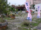 7  藍山園藝:海棠颱風後的藍山園藝DSCN5060