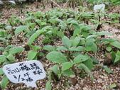 4-3  雪霸原生植物繁殖培育:104-0407  雪霸苗圃維護 (15).JPG