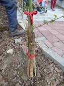 4-4  雪見 - 環境教育及工作假期:104-0430-2 泰安國小環境教育--種樹 (29).jpg