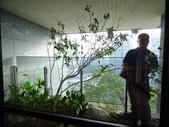 陽台上種大樹 -- 若山:105-1021 綠建築新工法審查--若山 (43).jpg