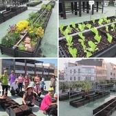 1-4  屋頂菜園 -- 竹南營盤社區之社區營造屋頂菜園:相簿封面