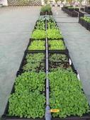 1-4  屋頂菜園 -- 竹南營盤社區之社區營造屋頂菜園:103-1030 屋頂菜園--營盤社區營造 (31).jpg