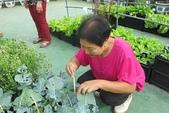 1-4  屋頂菜園 -- 竹南營盤社區之社區營造屋頂菜園:103-1127  營盤社區屋頂菜園--審查及收成 (3).jpg