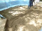 樹木基盤改善--台北列管老樹816號:105-1020 樹木基盤改善--台北列管老樹816號 (62).jpg