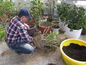 4-3  雪霸原生植物繁殖培育:104-0225  雪霸苗圃維護 (36).JPG