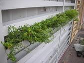 2-1  植生綠牆-花牆-立面綠化-垂直綠化-植生牆:綠牆 -- 台北 龍鳳學院980919- 07.