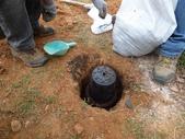 樹木棲地改善--麗池公園土壤透氣工法:104-1221 麗池--透氣工法 (19).jpg