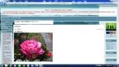 7  藍山園藝:95-09-24 yahoo第一篇文章 (1).jpg
