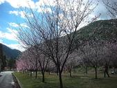 4-5  武陵的春天 --  武陵賞櫻:9802-058 武陵櫻花-遊客中心.JPG