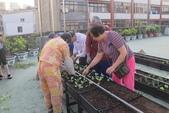 1-4  屋頂菜園 -- 竹南營盤社區之社區營造屋頂菜園:103-1022 屋頂菜園--營盤社區營造 (184).jpg