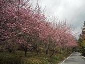 4-5  武陵的春天 --  武陵賞櫻:武陵 100-0212- 314.jpg