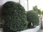 11-9 綠籬植物: