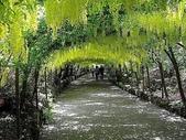 5-4  美麗的花園:美麗花園  040.jpg