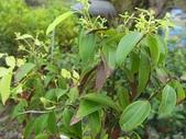 9-5  園藝技術 -- 施肥:104-0227-1  肥料試驗-八寸盆200克 (3).jpg
