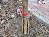 4-4  雪見 - 環境教育及工作假期:104-0430-2 泰安國小環境教育--種樹 (33).jpg