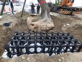 擴大樹穴結構模組--台中列管老樹移植施工實例:105-1206 台中水湳列管老樹移植 (218).jpg