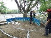 樹木基盤改善--台北列管老樹816號:105-1020 樹木基盤改善--台北列管老樹816號 (15).jpg