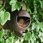 7  藍山園藝:鳥窩