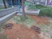 樹木棲地改善--麗池公園土壤透氣工法:104-1221 麗池--透氣工法 (25).jpg
