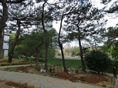 樹木棲地改善--麗池公園土壤透氣工法:104-1223 麗池--透氣工法 (23).jpg