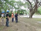 樹木基盤改善--台北列管老樹816號:105-1020 樹木基盤改善--台北列管老樹816號 (5).jpg