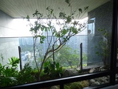 陽台上種大樹 -- 若山:105-1021 綠建築新工法審查--若山 (18).jpg