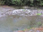 4-5  武陵的秋天:100-1107 櫻花鉤吻鮭繁殖季 (7).jp