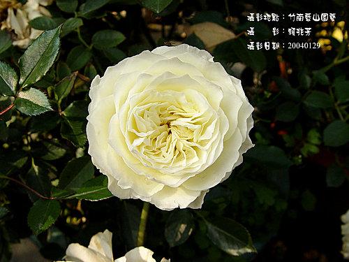 藍山園藝 -9-  賴兆芳攝影集:藍山園藝1044