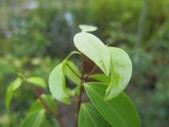 9-5  園藝技術 -- 施肥:104-0227-2  肥料試驗-八寸盆100克 (6).jpg