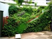 綠牆--法國綠牆大師派翠克.布朗克(Patrick Blanc)綠牆作品:20090126_111612_kencub.jpg
