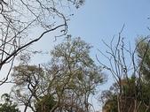 7  藍山園藝:102-0317 藍山野鳥園--麥田 (4).jp