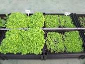 1-4  屋頂菜園 -- 竹南營盤社區之社區營造屋頂菜園:103-1030 屋頂菜園--營盤社區營造 (12).jpg