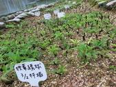 4-3  雪霸原生植物繁殖培育:104-0407  雪霸苗圃維護 (13).JPG