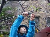 105-0111 新竹公園麗池-日本樹木醫櫻花課程: