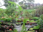 7  藍山園藝:961007 藍山園藝--科羅莎颱風DSCN9375