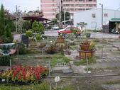 7  藍山園藝:海棠颱風後的藍山園藝DSCN5059