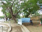 樹木基盤改善--台北列管老樹816號:105-1020 樹木基盤改善--台北列管老樹816號 (38).jpg