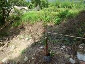 4-4  雪見 - 環境教育及工作假期:104-0430-2 泰安國小環境教育--種樹 (46).jpg