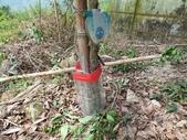 4-4  雪見 - 環境教育及工作假期:104-0430-2 泰安國小環境教育--種樹 (59).jpg