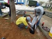 樹木棲地改善--麗池公園土壤透氣工法:104-1221 麗池--透氣工法 (18).jpg