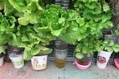 1-4  屋頂菜園 -- 竹南營盤社區之社區營造屋頂菜園:103-1127  營盤社區屋頂菜園--審查及收成 (61).jpg