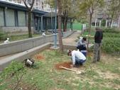 樹木棲地改善--麗池公園土壤透氣工法:104-1221 麗池--透氣工法 (23).jpg