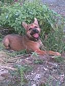 我家的狗 來寶 成長錄:01.2009年7月10日