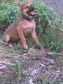 我家的狗 來寶 成長錄:02.2009年7月10日
