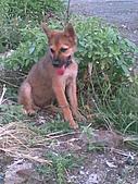我家的狗 來寶 成長錄:03.2009年7月10日