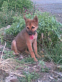 我家的狗 來寶 成長錄:04.2009年7月10日