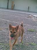 我家的狗 來寶 成長錄:06.2009年7月10日