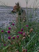 我家的狗 來寶 成長錄:07.2009年7月10日