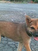 我家的狗 來寶 成長錄:08.2009年7月10日