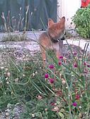 我家的狗 來寶 成長錄:09.2009年7月10日
